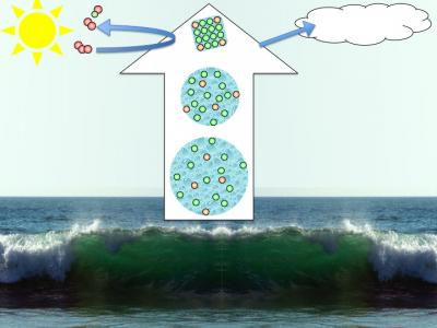 From sea-spray to saline aerosol particles